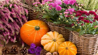 Die schönsten Deko-Ideen für Ihren Garten im Herbst