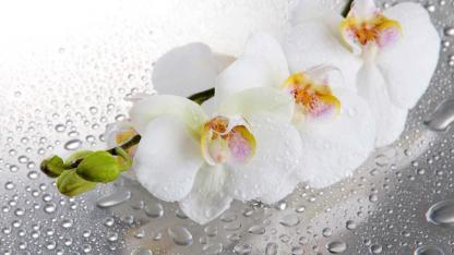 Richtige Orchideenpflege im Winter