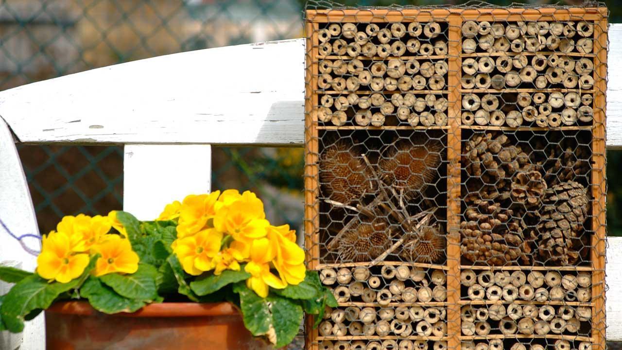 Die Überwinterung der Marienkäfer - Insektenhotel