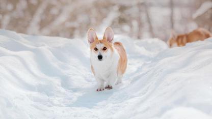 Die richtige Pfotenpflege im Winter - am Winterpfad