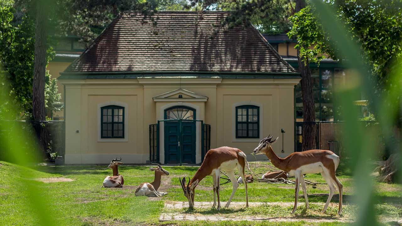 Die schönsten Tierparks in Österreich - Schönbrunn
