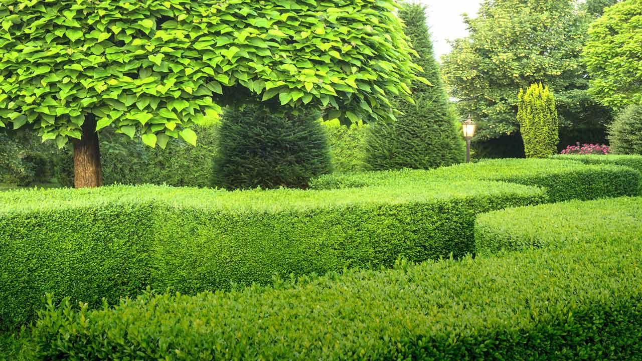 Welche Hecken sind die pflegeleichtesten - Buchbaum