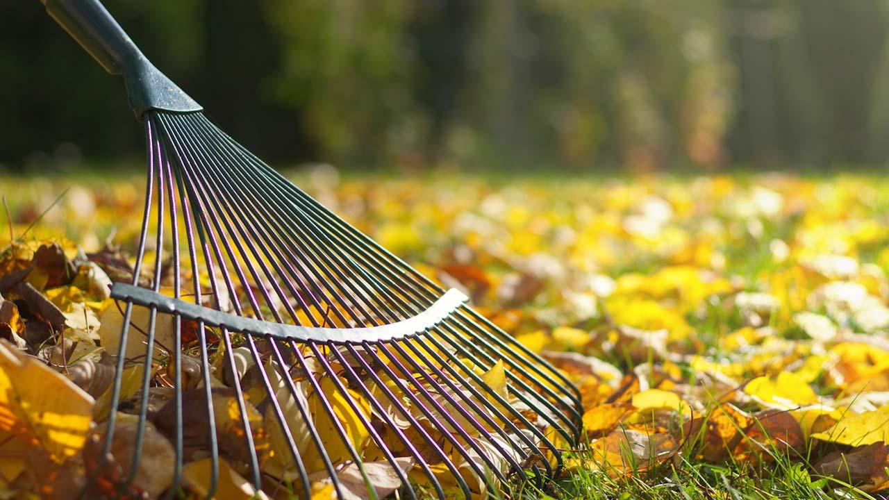Herbstlaub im Garten sinnvoll nutzen - Rechen