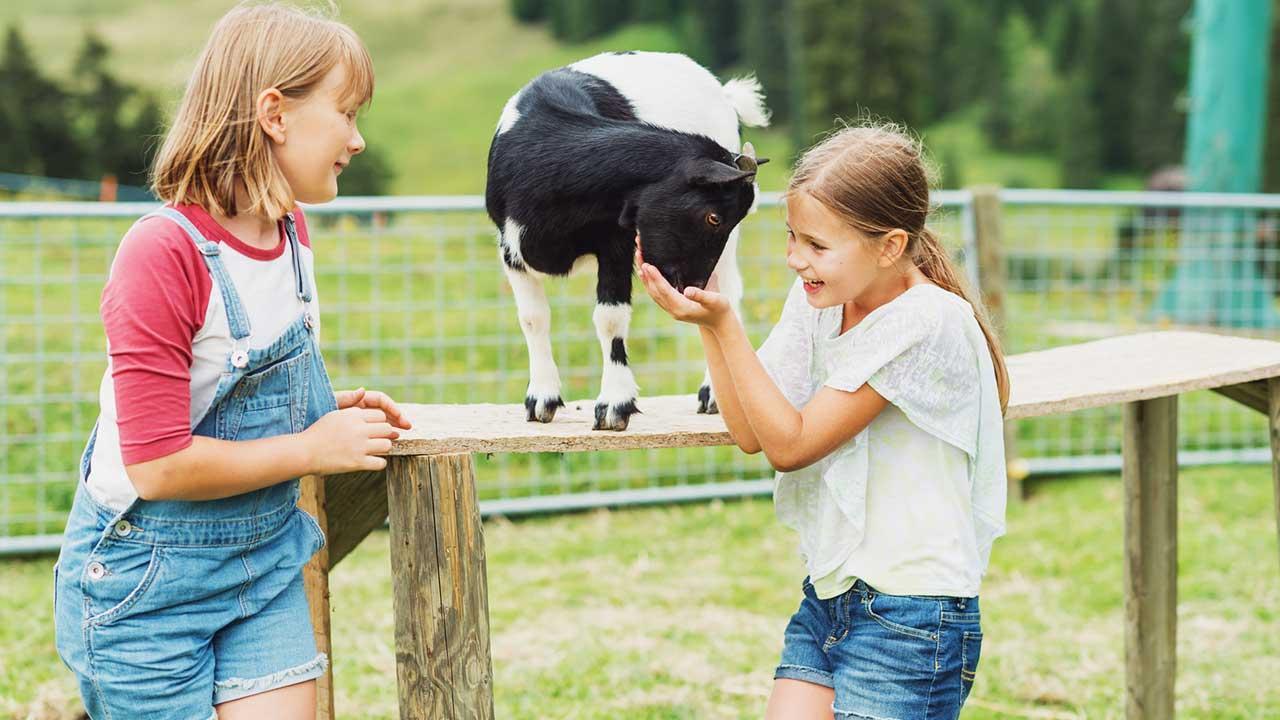 Die fünf sehenswertesten Tierparks der Schweiz - Kinder füttern Tiere