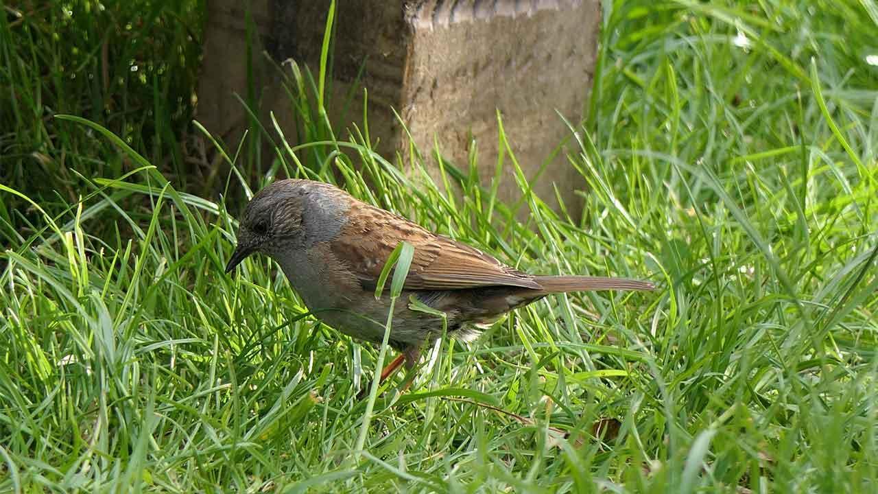 Nachhaltiger Garten - Vögel im Gras