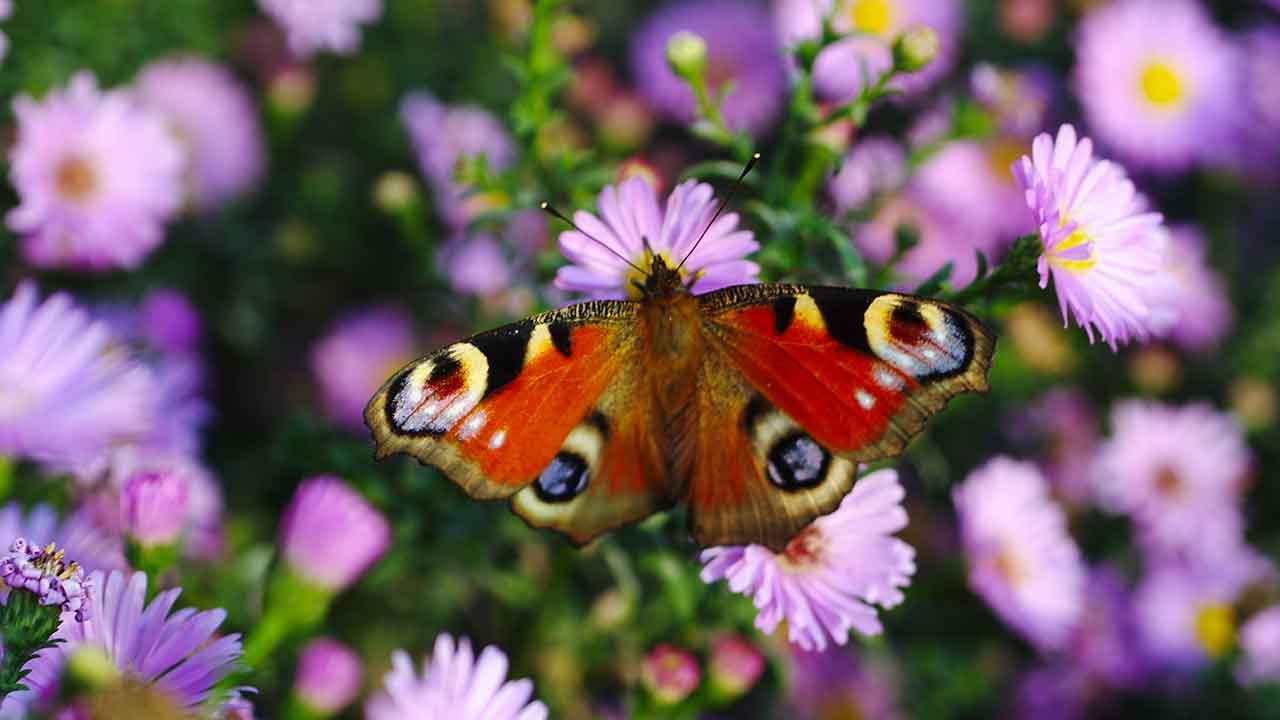 Nachhaltiger Garten - Schmetterling auf einer Blume