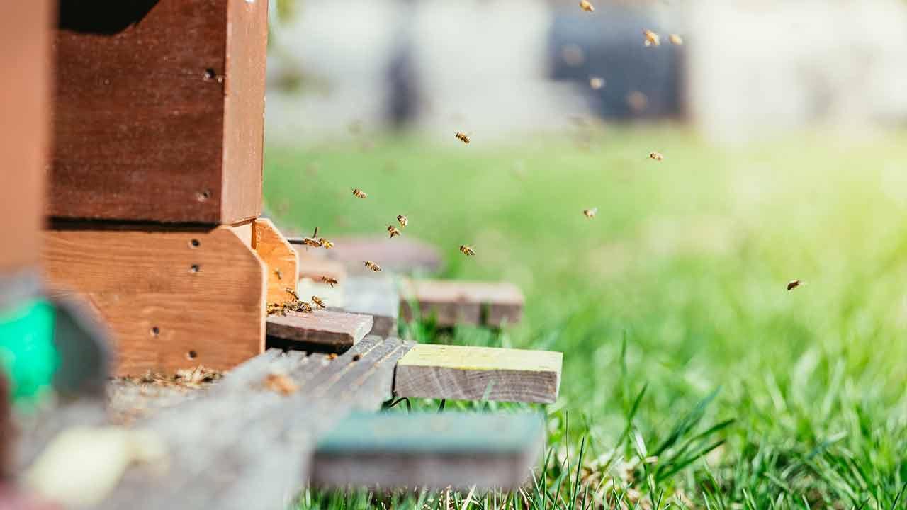 Nutztiere im eigenen Garten - Bienenstock