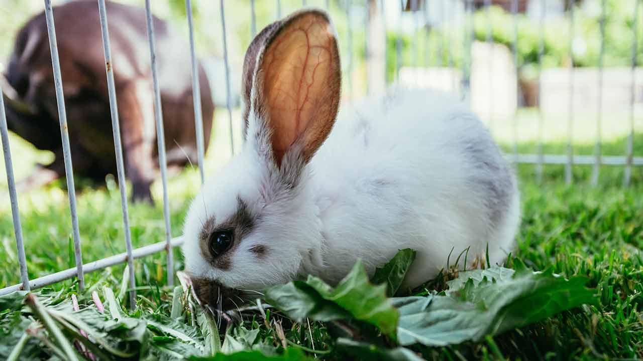 Nutztiere im eigenen Garten - Hasen und Kaninchen