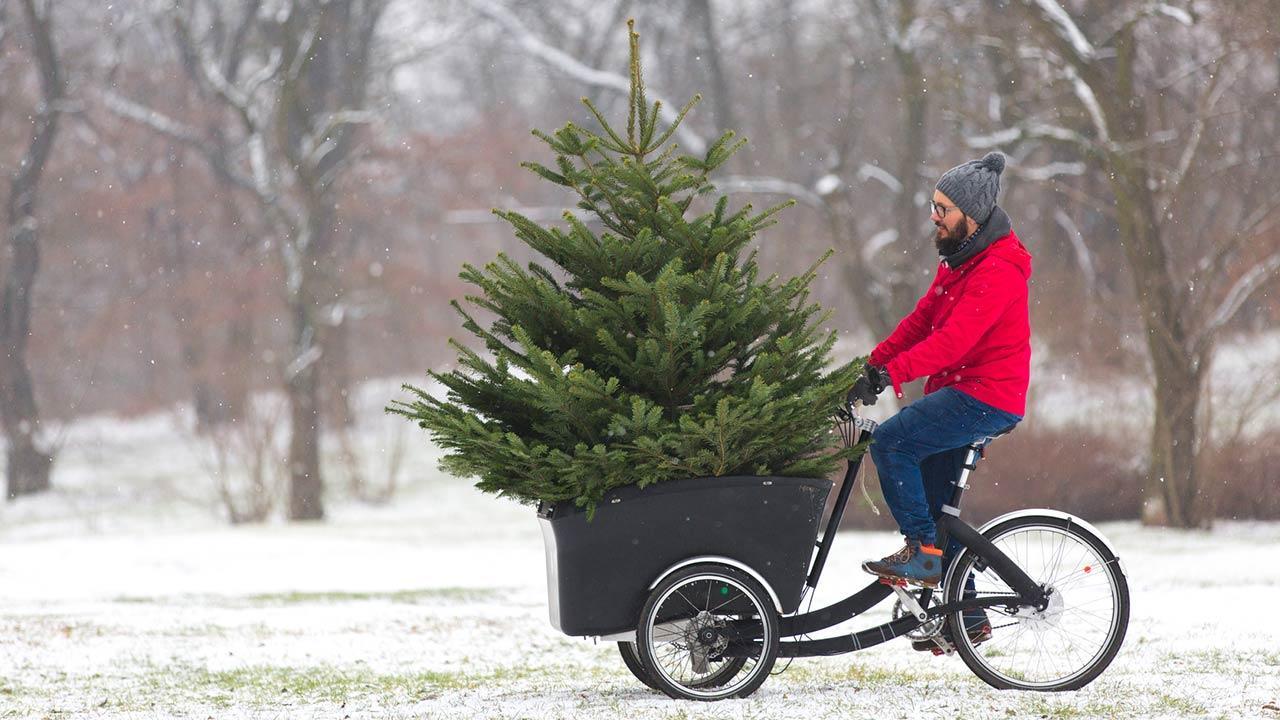Der perfekte Weihnachtsbaum im Haus - per Rad transportiert