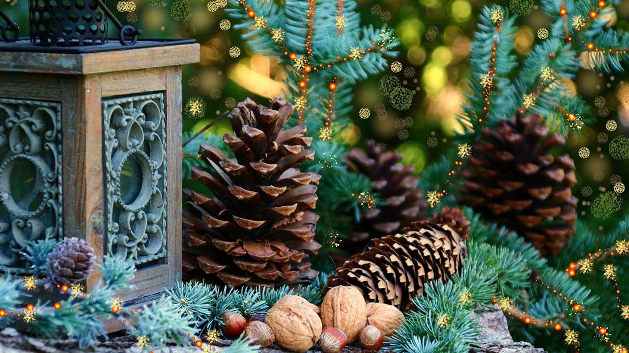 Waldweihnacht im eigenen Garten - Zapfen und Nüsse