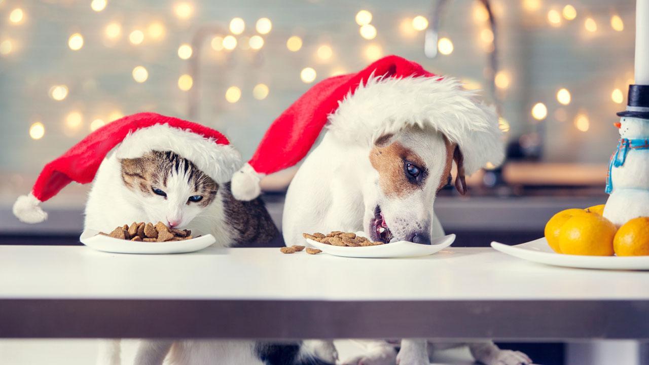 Was schenke ich meinem Haustier zu Weihnachten - Hund und Katz beschenkt
