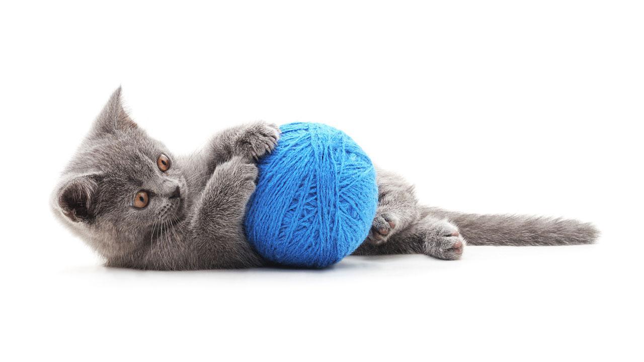 Was schenke ich meinem Haustier zu Weihnachten - Katze spielt mit Wollknäuel