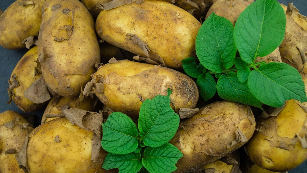 Wärmende Kartoffelsuppe für die kalte Jahreszeit - rohe Kartoffel