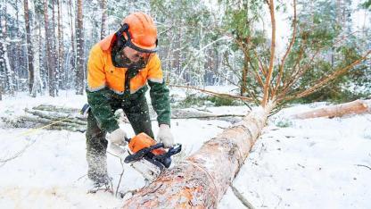Bäume fällen - Bitte immer nur im Winter !