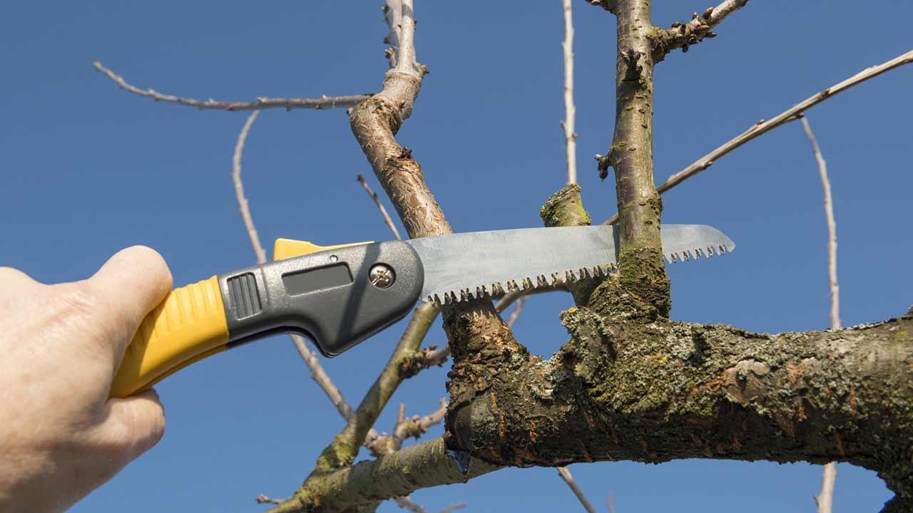 Der richtige Obstbaumschnitt - Ästen sägen