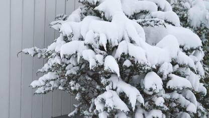 Gartenpflanzen vor der Schneelast schützen