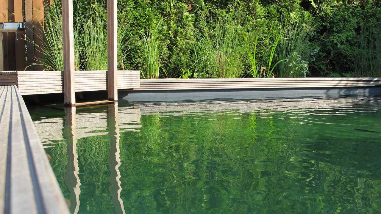 Schwimmteich statt Swimmingpool - Naturpool