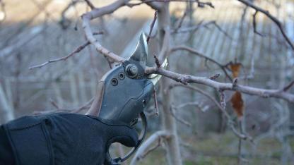 Der richtige Winterschnitt von Hecken und Sträuchern - Elektroschere