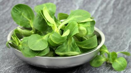 Leckere Rezepte mit Feldsalat