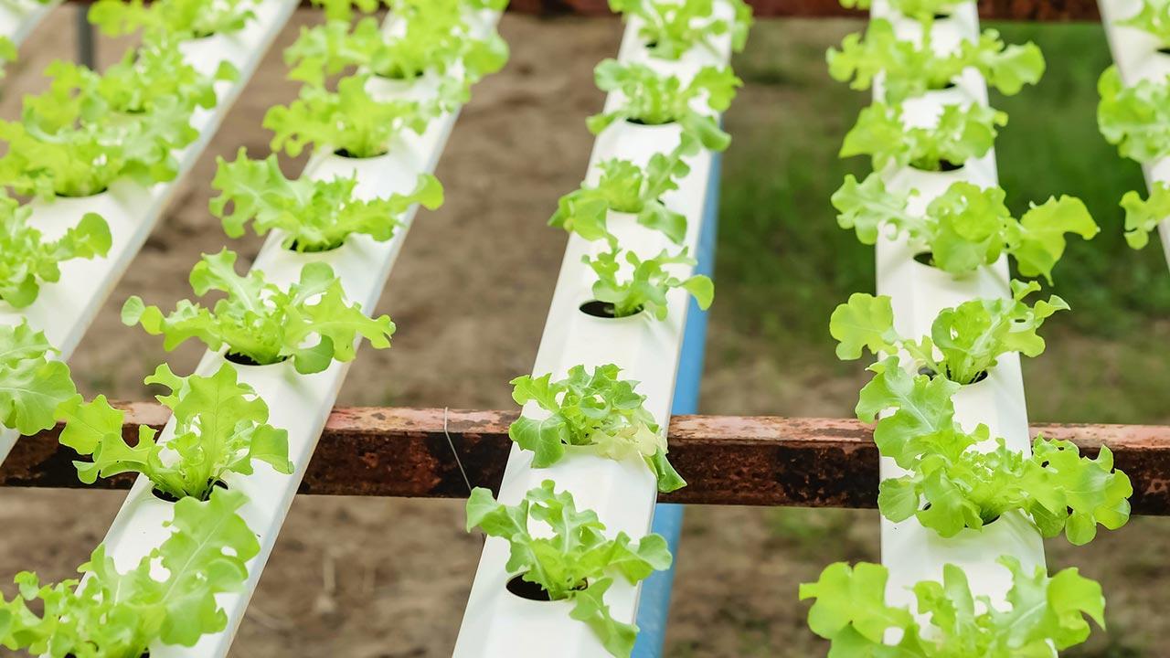 Welches Gemüse kann ich im März pflanzen - Pflanzenreihen