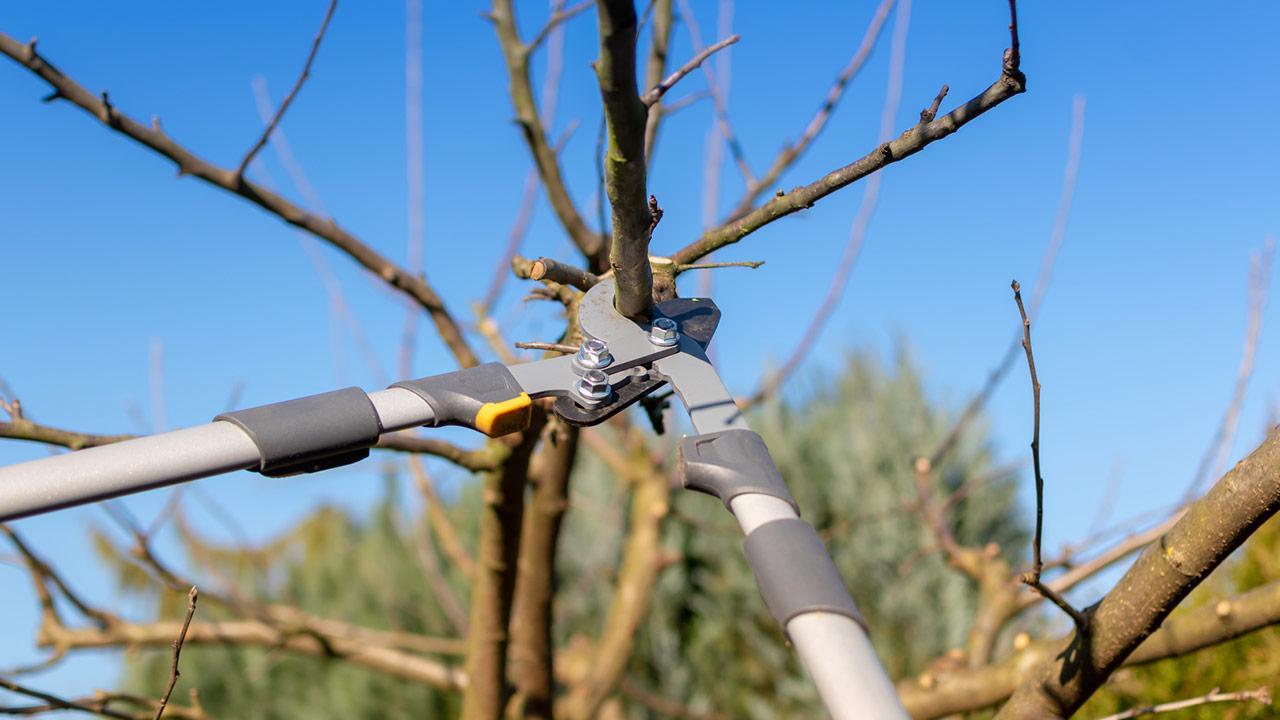 Obstbäume im Frühling richtig beschneiden - Apfelbaum