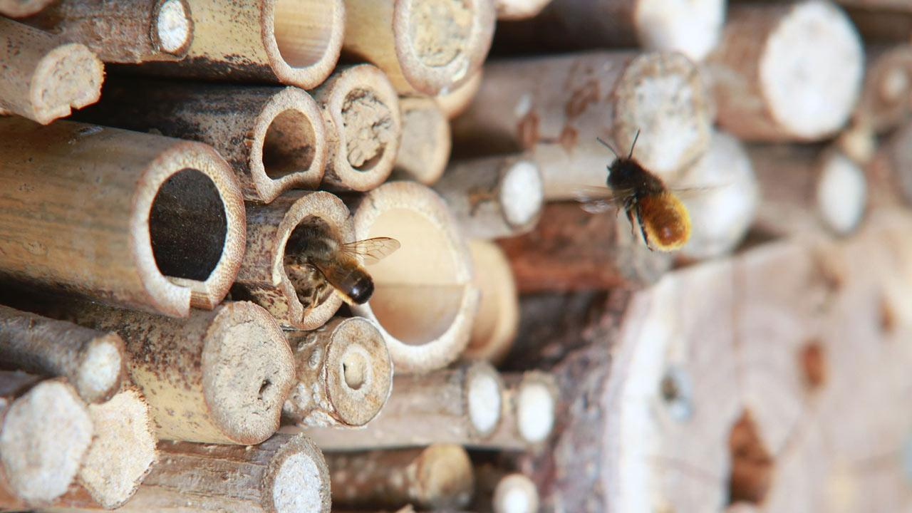 Insektenhotel selbst bauen, Tipps und Tricks - Bienen
