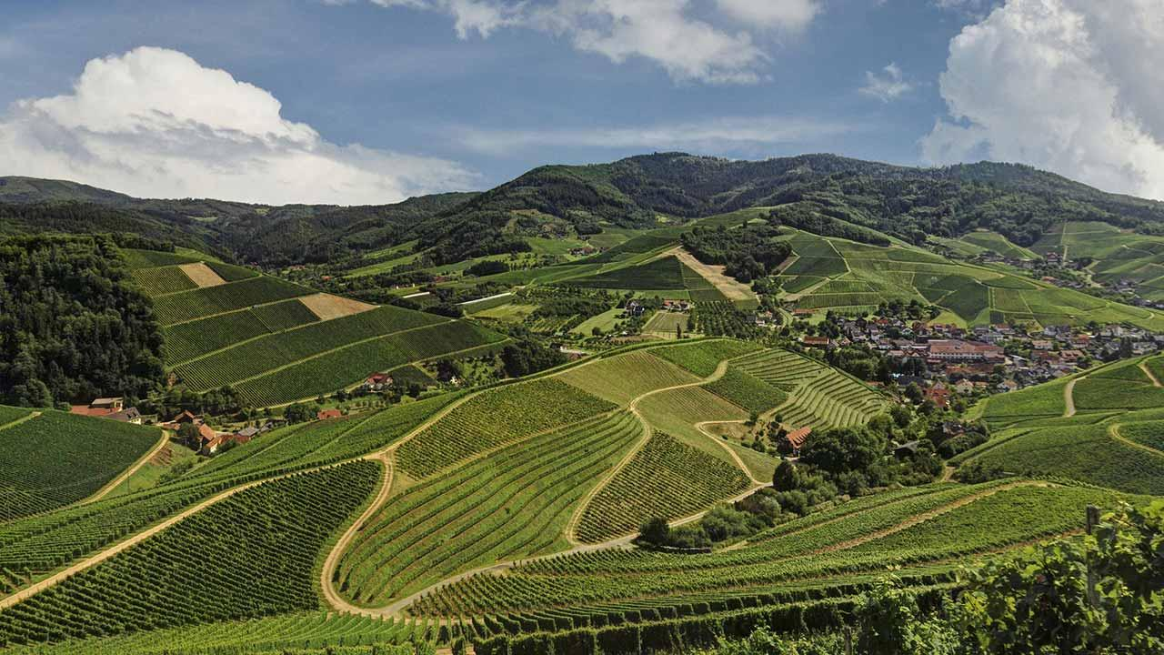 Wandern im Schwarzwald: Kaiserstuhlpfad - Ortenau