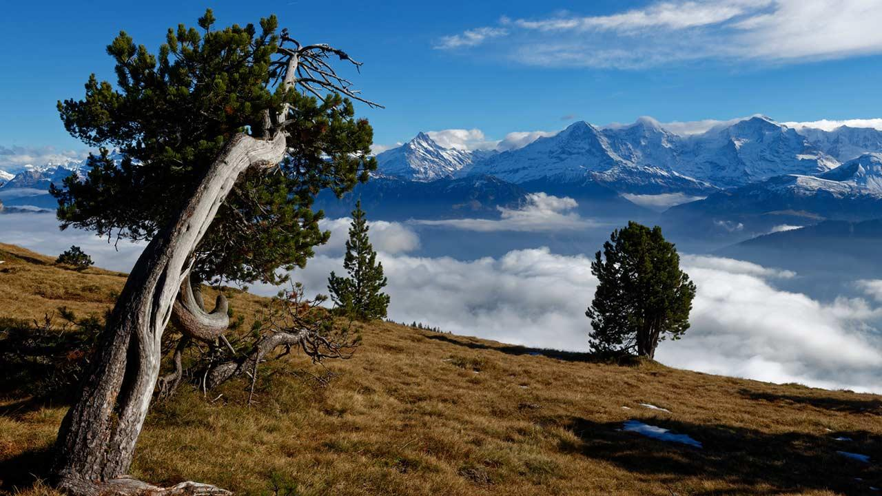 Frühlingswandern im Berner Oberland - Niederhorn