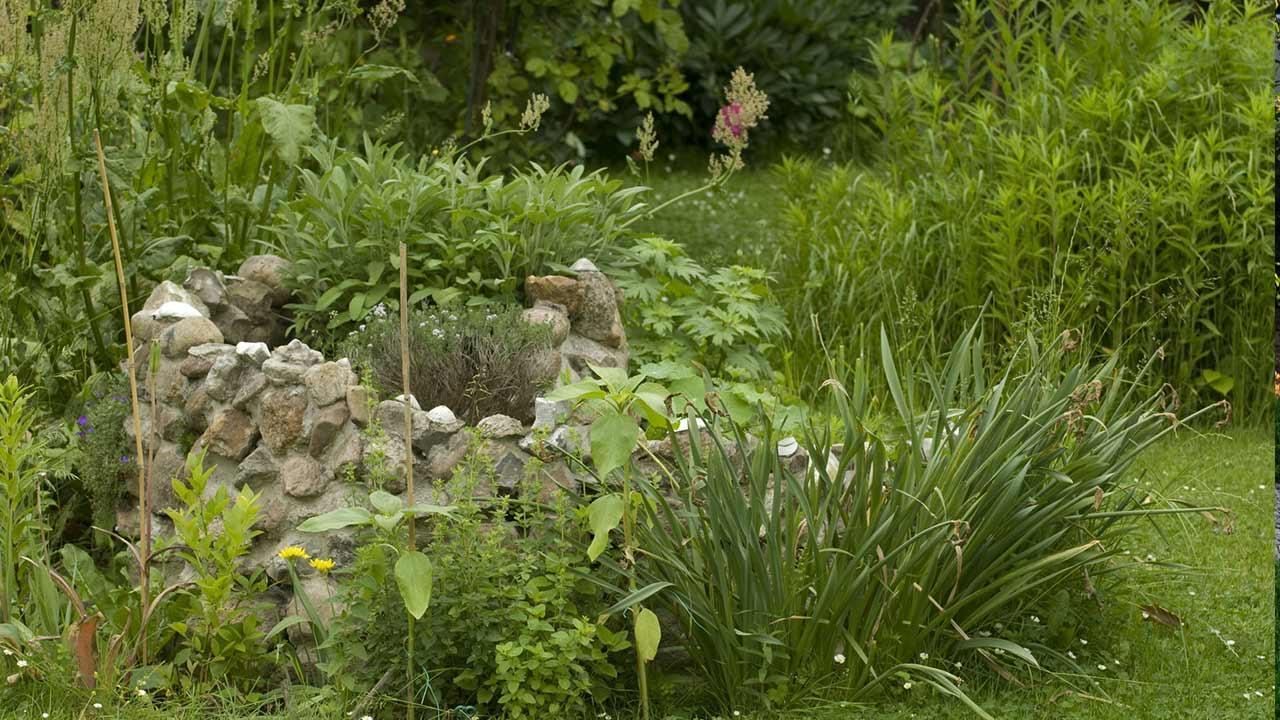 Eine Kräuterspirale im eigenen Garten - stark bewachsen