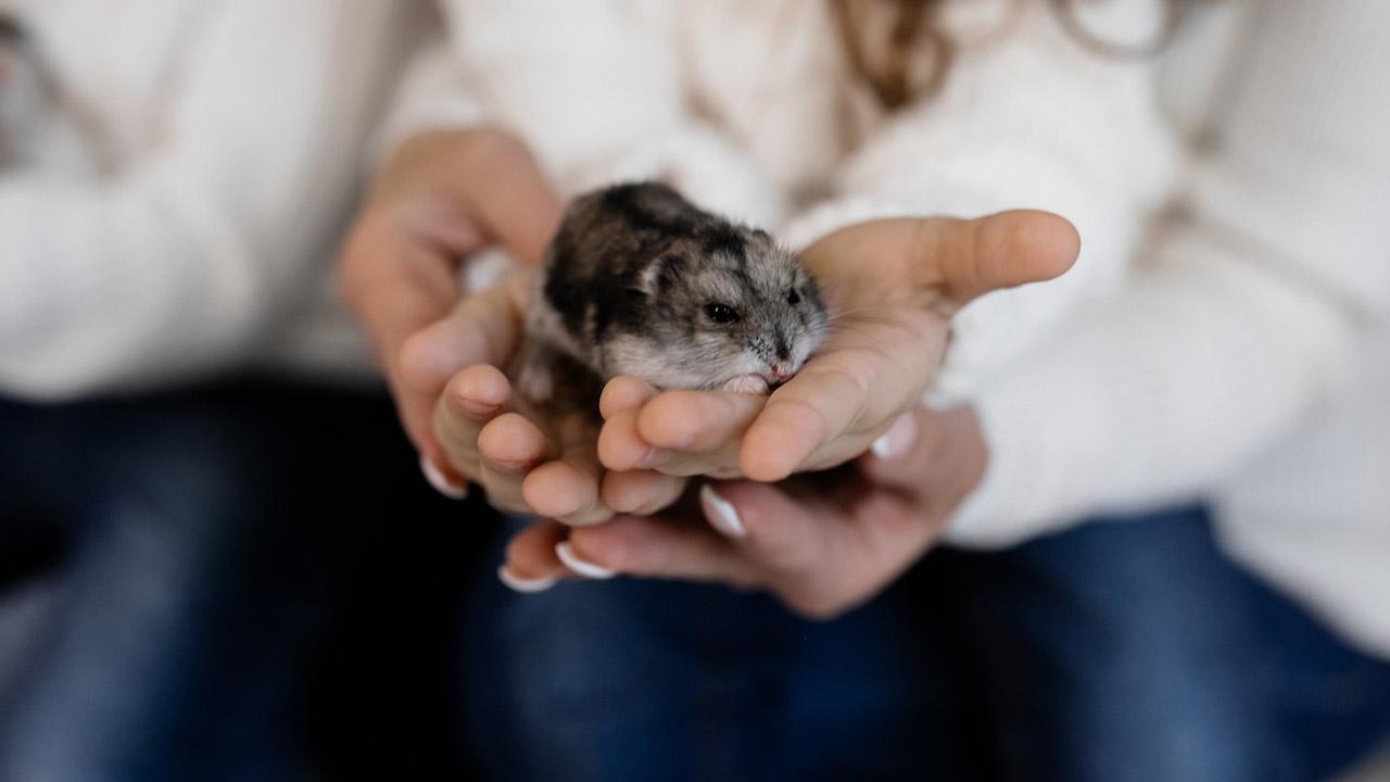 Der Hamster als Haustier für Kinder