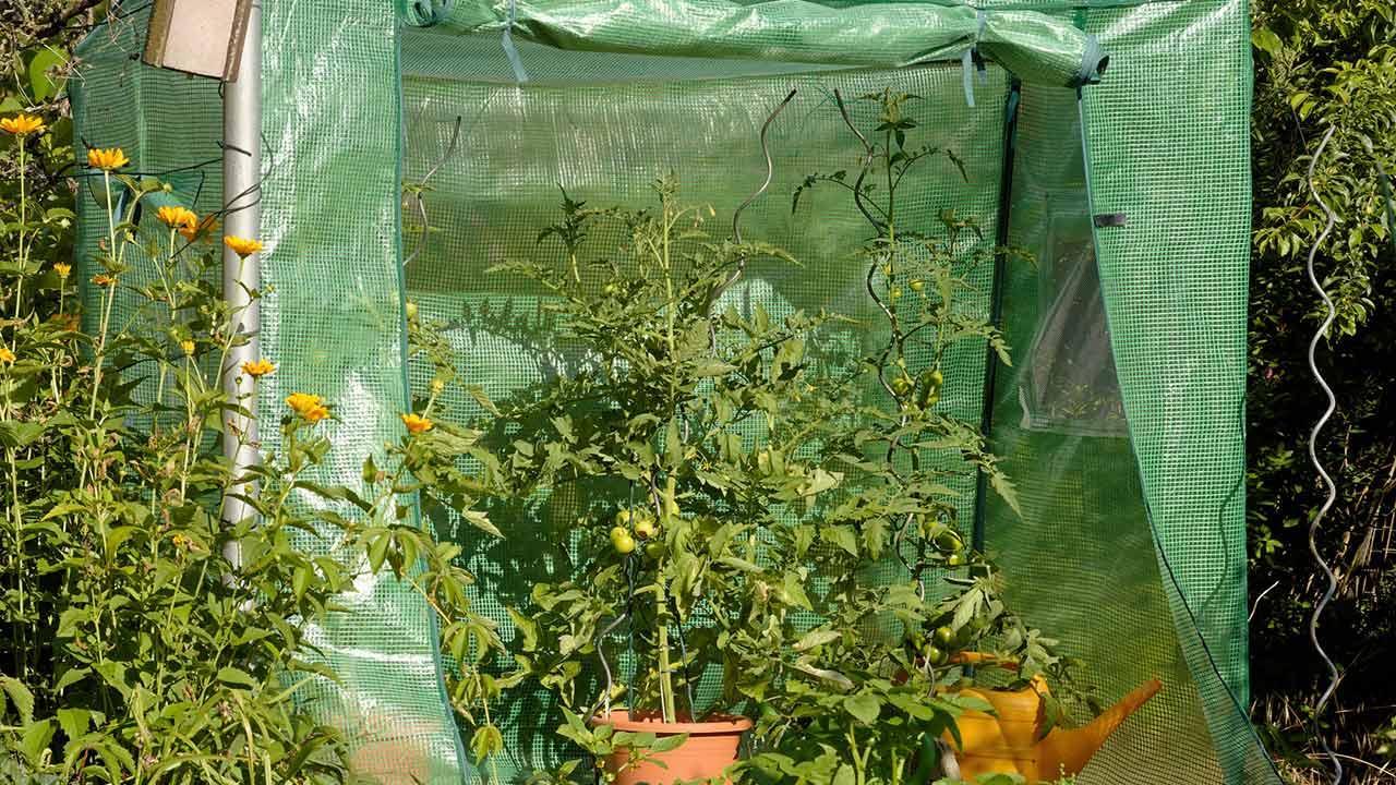 Tomatenhaus selbst bauen - simples Tomatenhaus