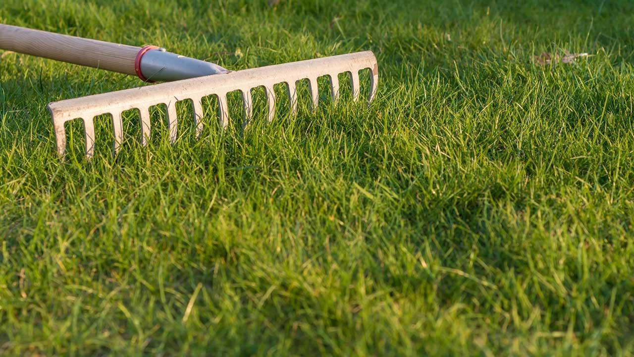 Den Rasen vertikutieren - mit dem Rechen