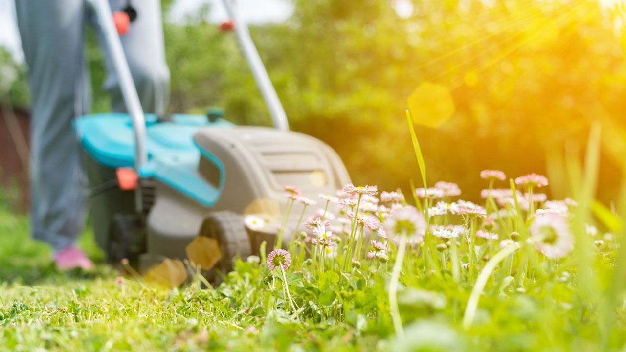 Rasenmäher in Betrieb bringen - Blumenwiese