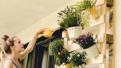Platzsparende Nutzpflanzen für Ihren Balkon