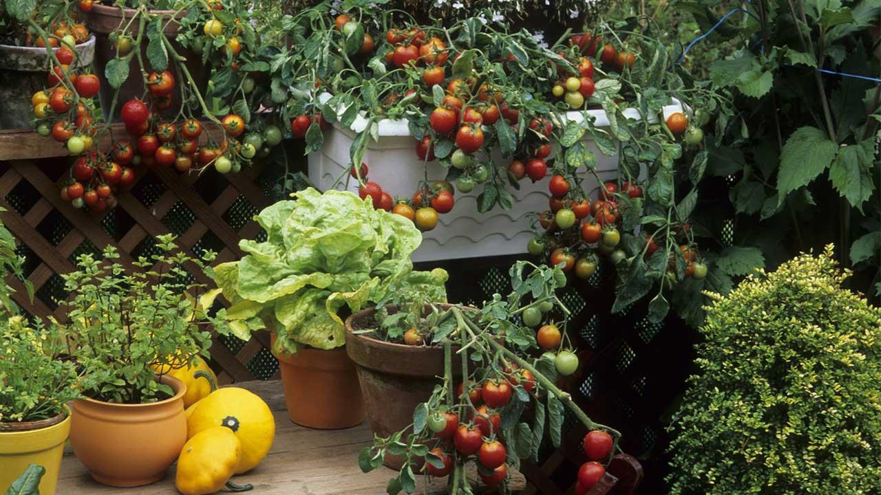 Platzsparende Nutzpflanzen für Ihren Balkon - Gemüse