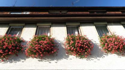 Blumenkästen schön bepflanzen - Blumen Fenster