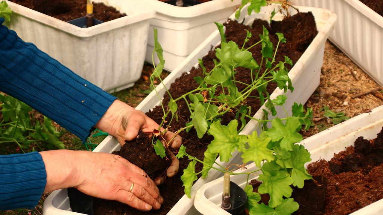 Blumenkästen schön bepflanzen - frisch pflanzen