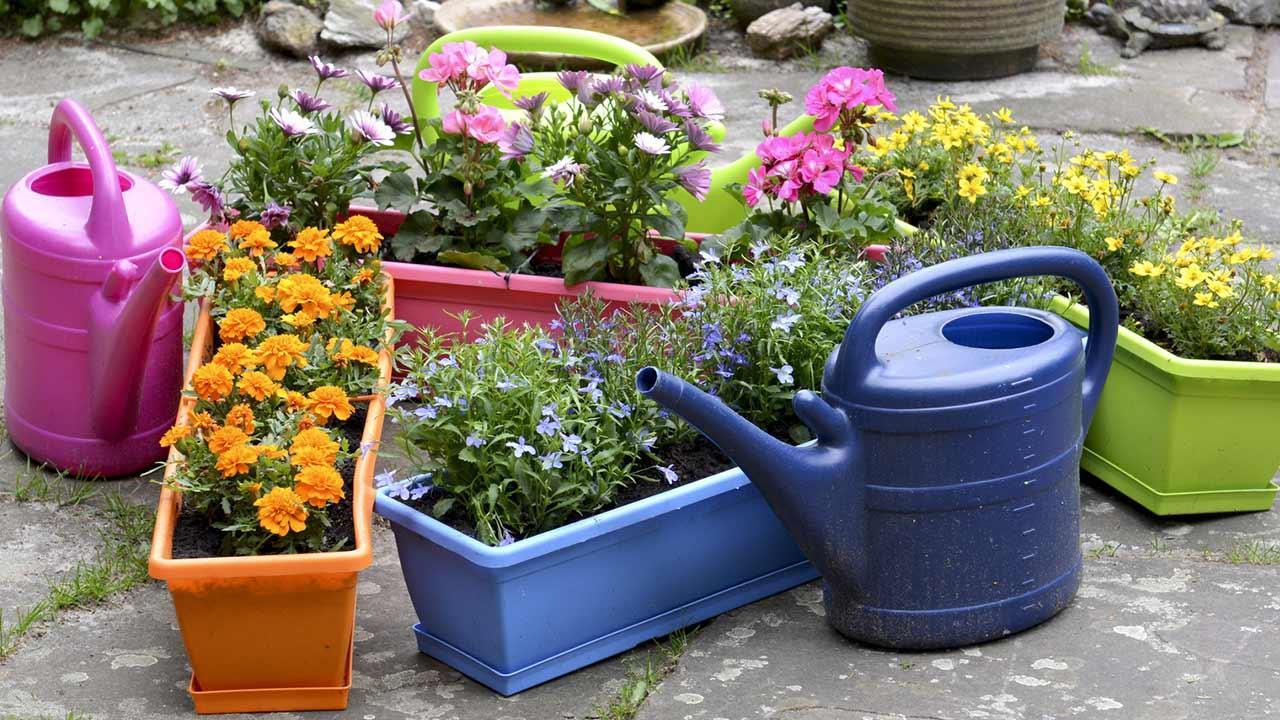 Blumenkästen schön bepflanzen - mehrere Kästen