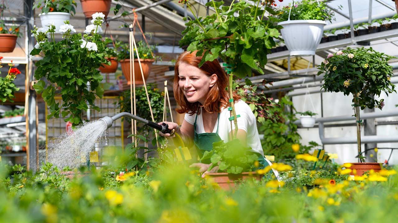 Welches Gewächshaus passt zu meinem Garten - Frau gießt Blumen