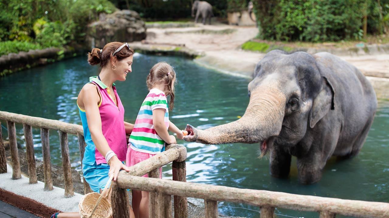 Die schönsten Tierparks in Deutschland - Elefant von Kind gefüttert