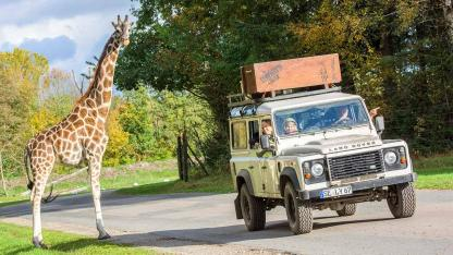 Serengetipark Hodenhagen - Giraffe mit Besucher