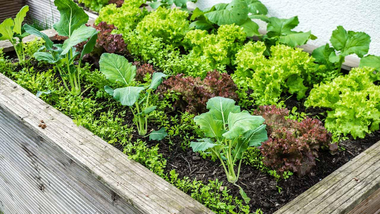 Hochbeete richtig anlegen - Salat und Kräuter