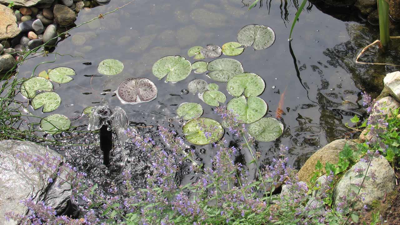 Gewässer im eigenen Garten anlegen / kleiner Teich im Herbst