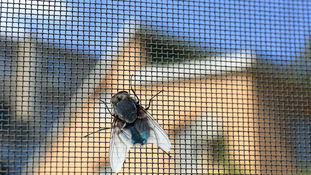 Effektiver Insektenschutz in Haus und Wohnung - Fliegengitter
