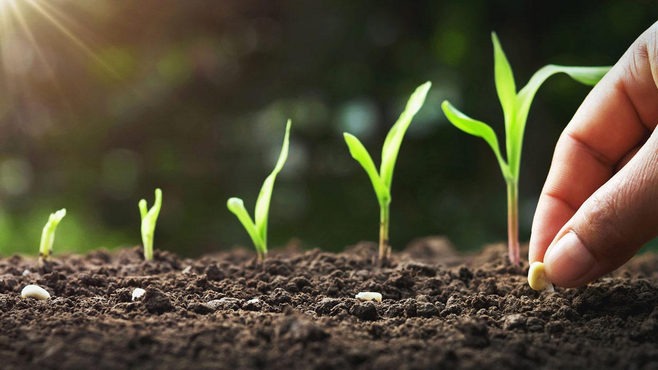 Aussaat im Juni / Mann setzt Samen