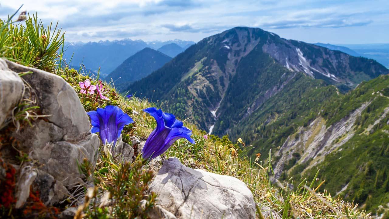 Wandern im Bayerischen Wald / Berggipfel Enzian