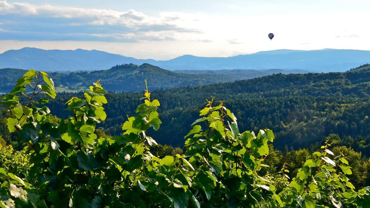 Ballon fahren über die Südsteiermark / Heißluftballon fahrt in der Weinberge in der Südsteiermark