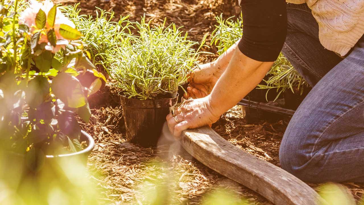 Sommersalat mit eigenen Kräutern pimpen / Frauch pflanzt Kräuter an