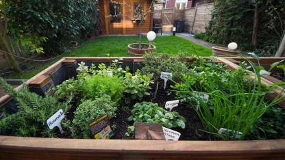 Sommersalat mit eigenen Kräutern pimpen