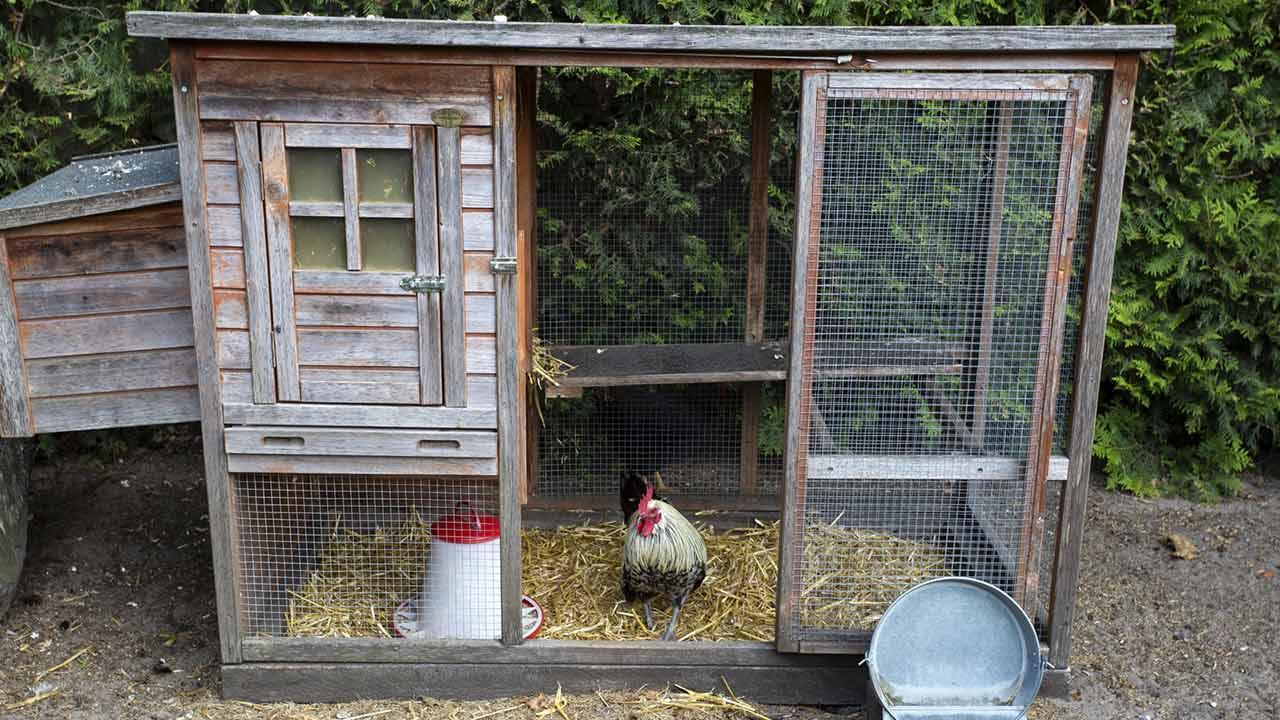 Hühner als Haustier / selbstgebauter Hühnerstall